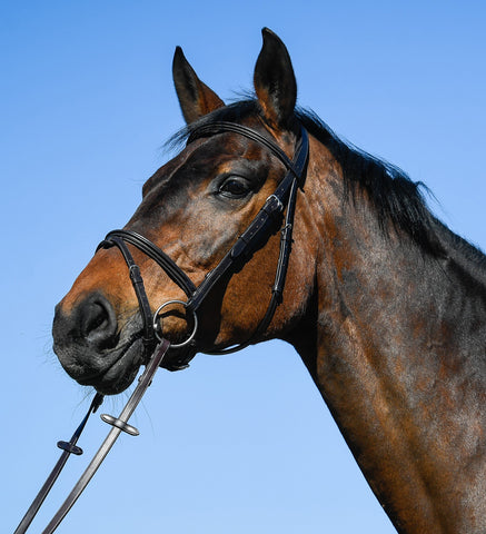 Amerigo Vespucci Flash Bridle
