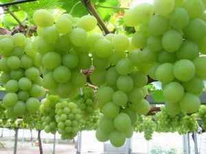 Grapes many