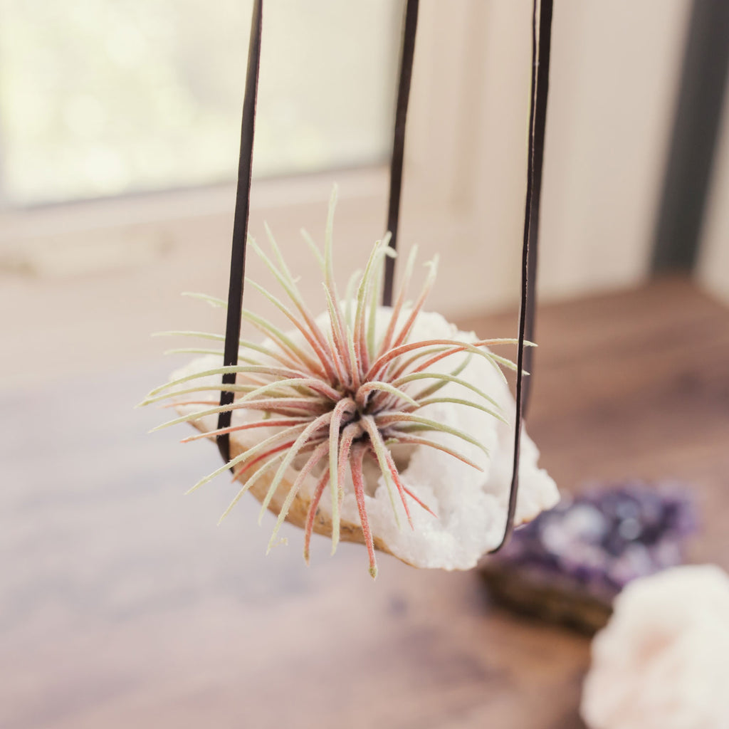 DIY Crystal Air Plant Holders