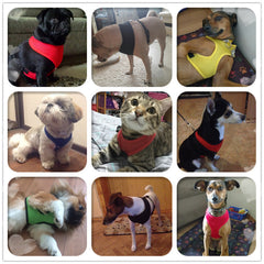 Adjustable Lightweight & Breathable Small Dog, Puppy & Cat Harness for Walking
