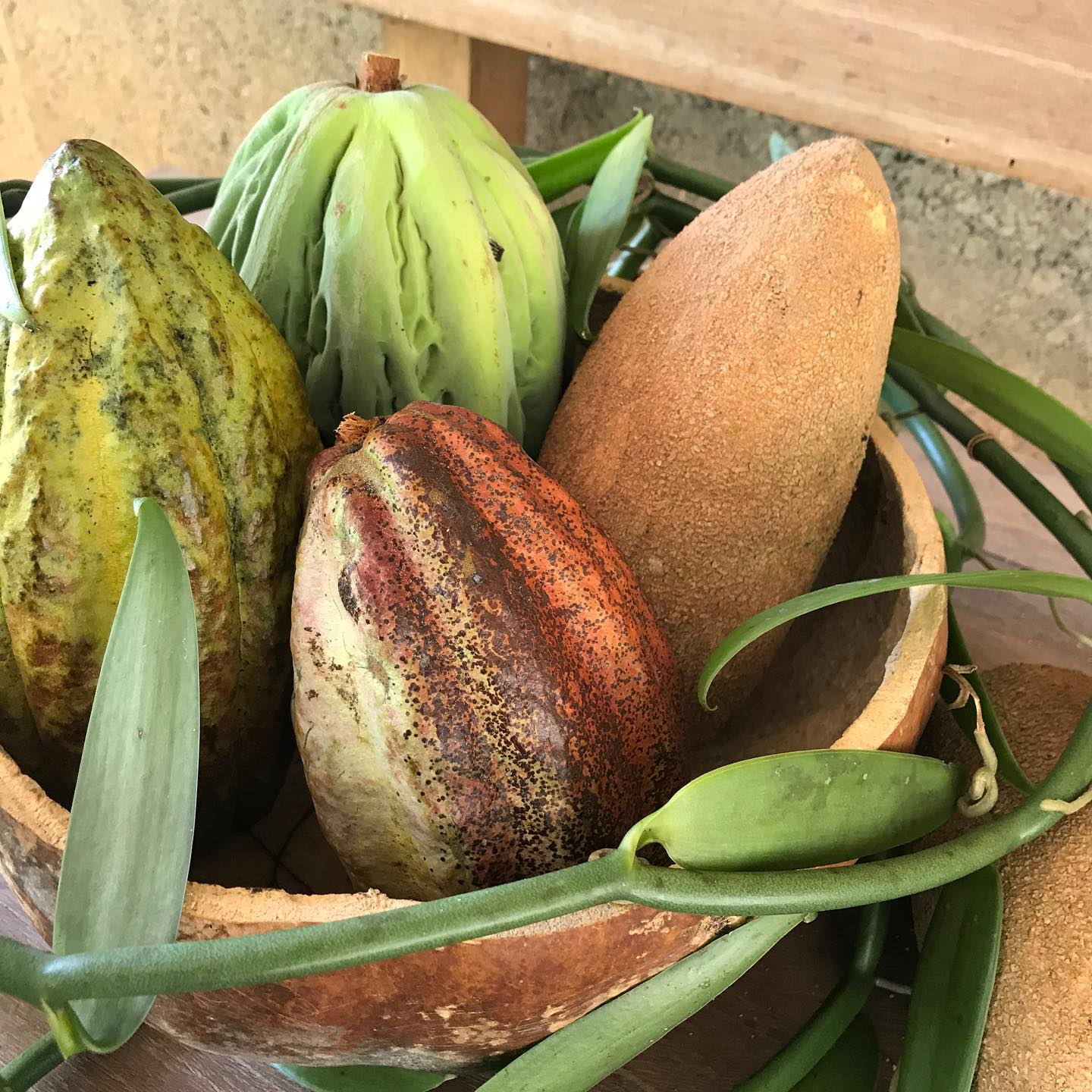 Albino Cacao & The Regeneration of Oaxaca's Forest Gardens