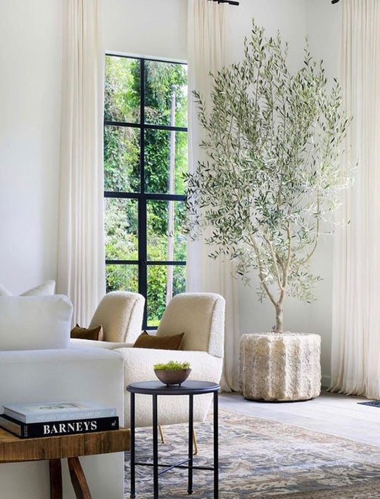 How to Decorate with Indoor Trees