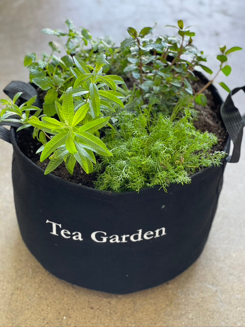 Tea Garden Kit with Live Plants