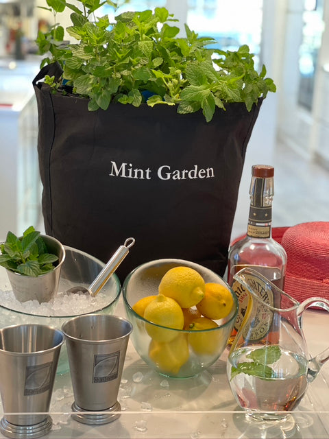Garden to Cocktail Mint Garden with Live Plants
