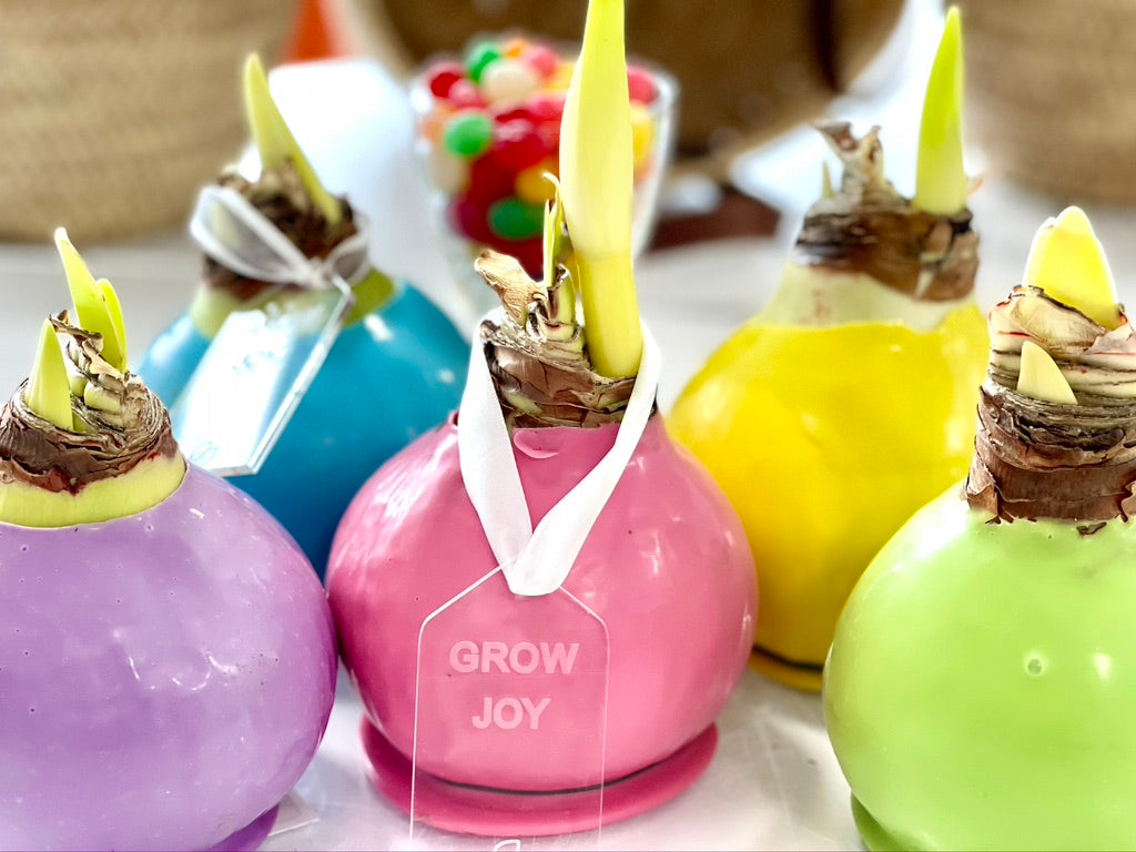 "Wax Dipped White Amaryllis Bulbs with ""Grow Joy"" Tag"