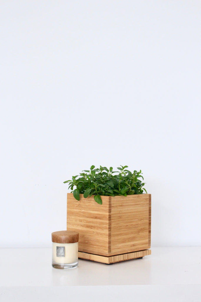 Mint Garden with Gardenia Votive