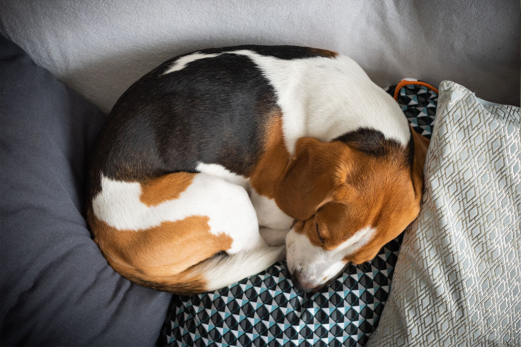 sleeping positions for dogs