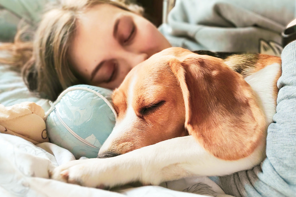 Avoid Sharing Your Bedroom With A Pet