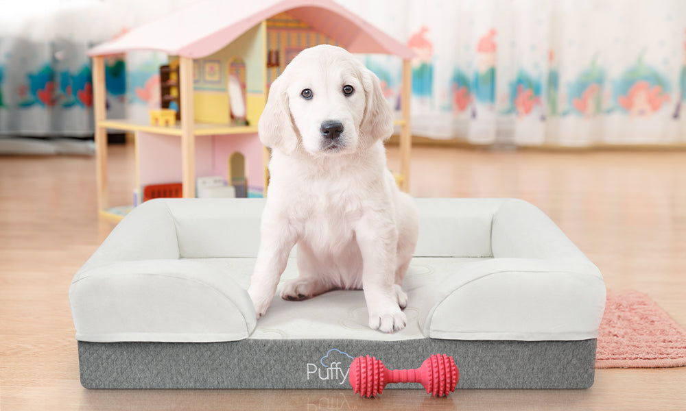 A dog sits on a Puffy Dog Bed | Puffy