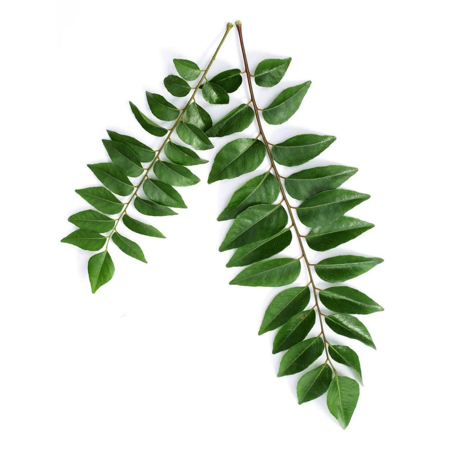 Curry Leaves (1 pkt)
