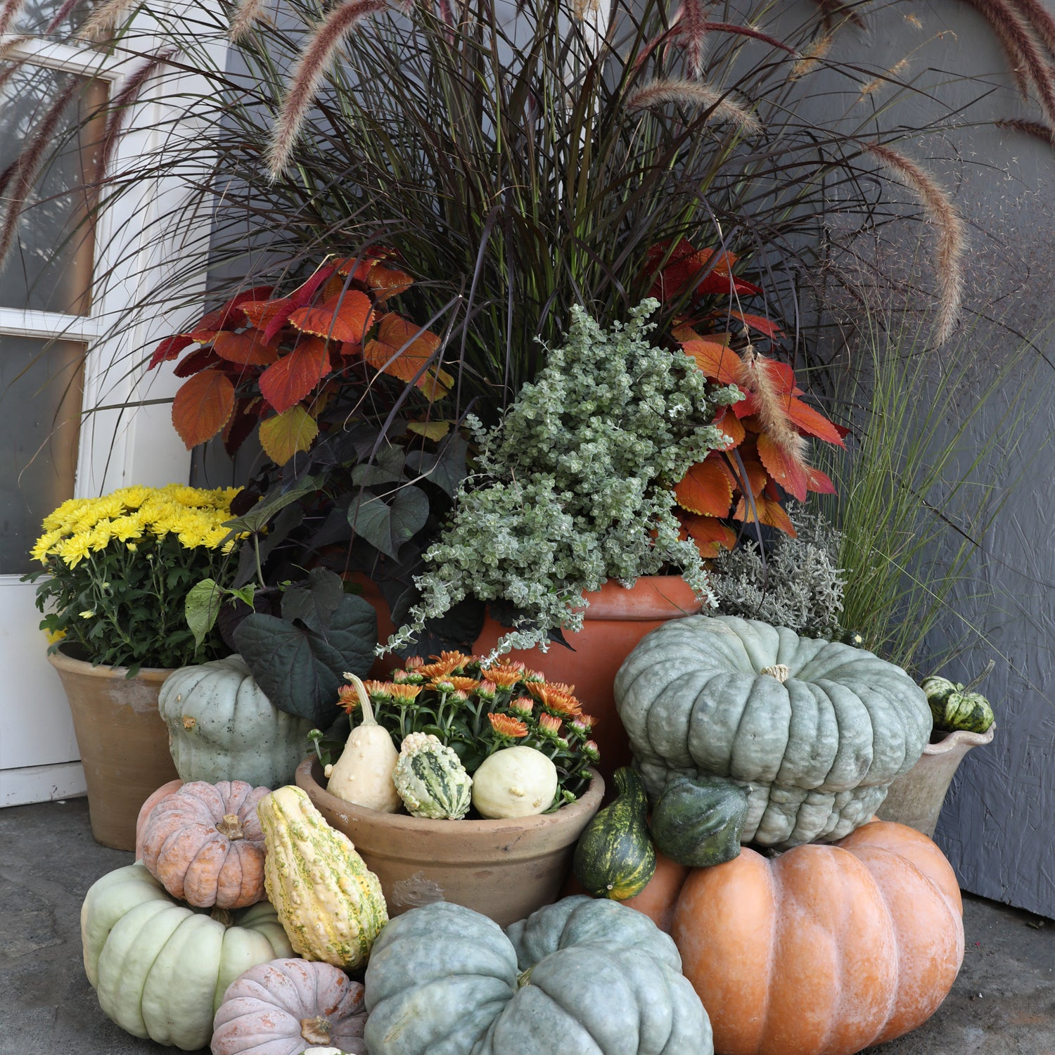 Grays and Gourds