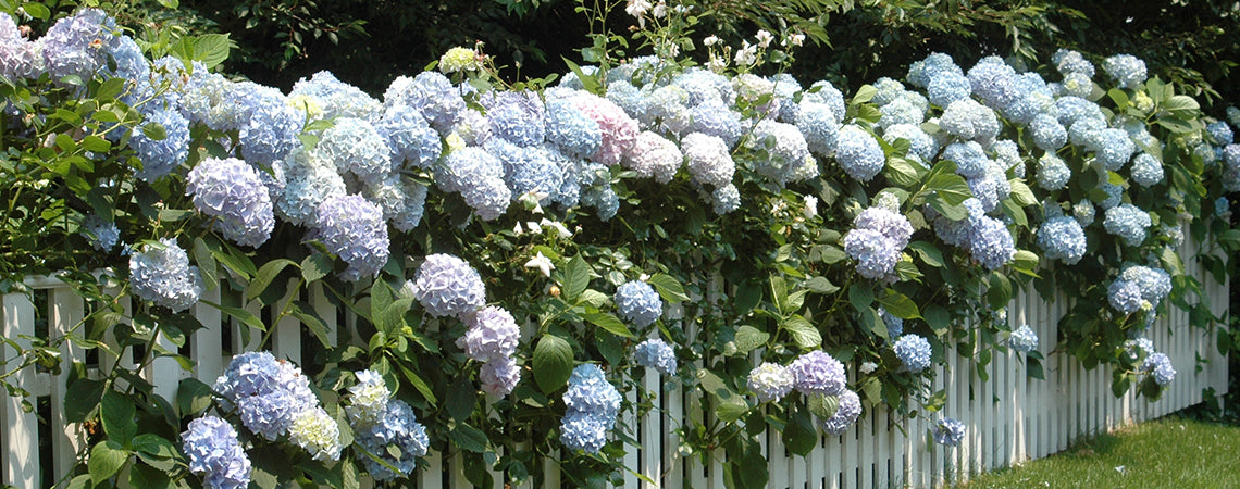 Prettiest Privacy Hedges