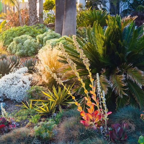 Drought Tolerant Landscaping Plants For Southern California