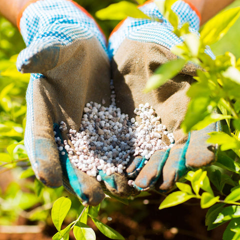 Gloved Hands Holding Fertilizer At Outdoor Plant Nursery