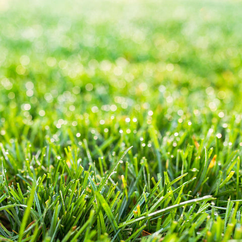 Close Up Of Green Lawn At A California Nursery