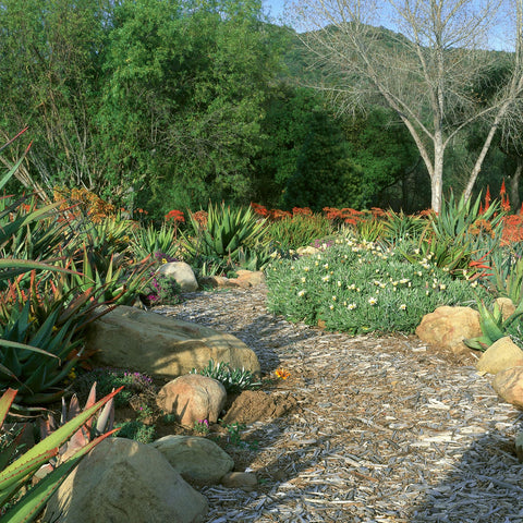 California Friendly Drought Tolerant Landscaping Plants