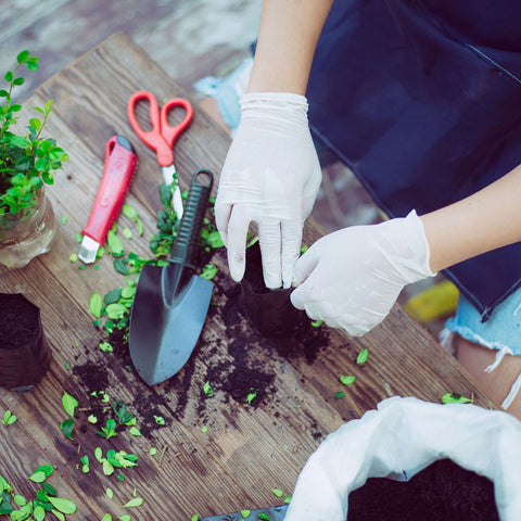 Someone Preparing Cuttings For Southern California Landscaping