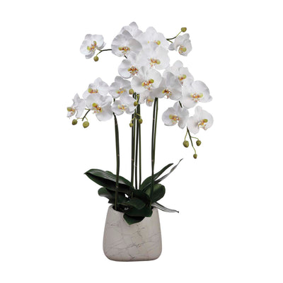 "35"" White Orchid Arrangement"