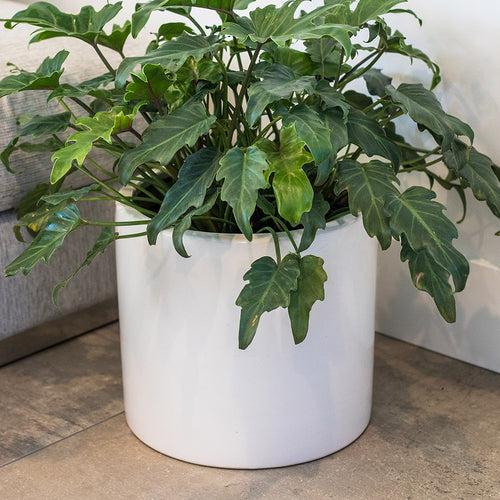 "CERAMIC POT 10"" (WHITE)"