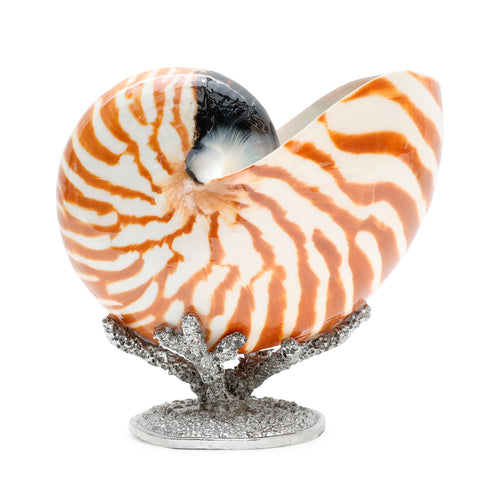 Nautilus on Pewter Coral Stand