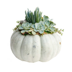Large Succulent Topped Pumpkin