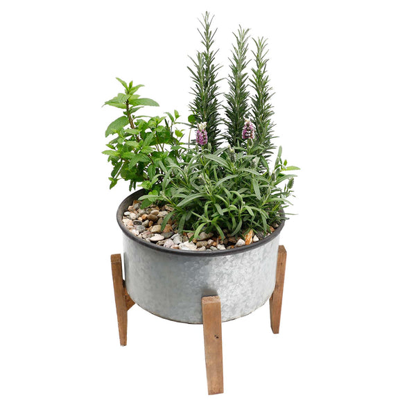 COCKTAIL HERB GARDEN