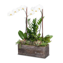 Orchids & Succulents in Rectangle Wood Planter