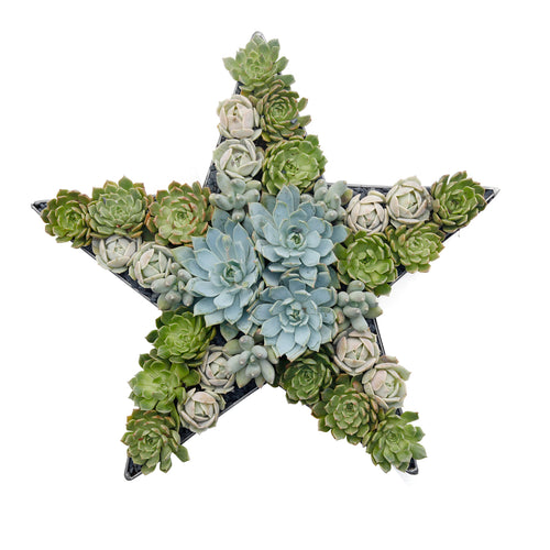 "Medium 17"" Metal Star With Succulents"