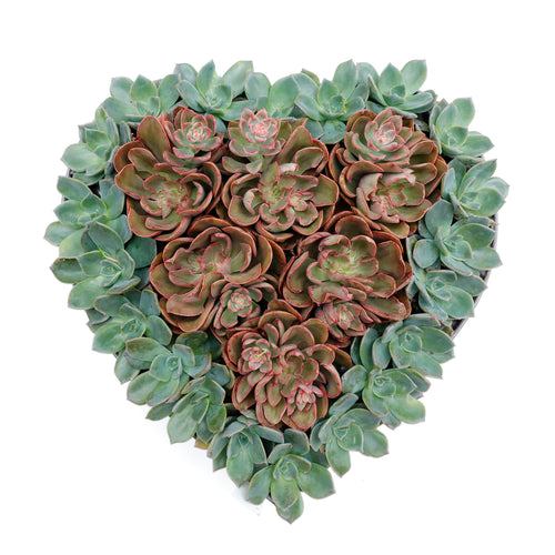 Succulents In Metal Heart - Large