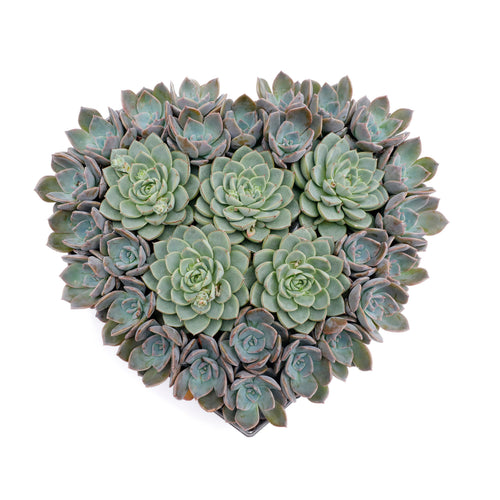 Succulents In Metal Heart - Medium