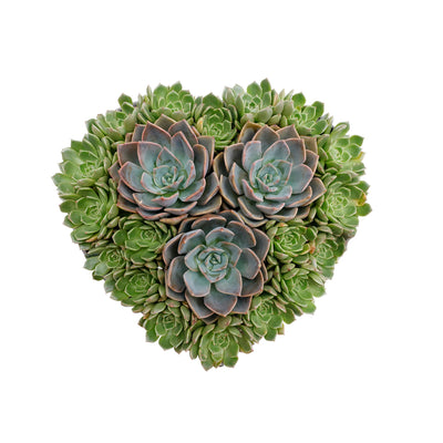 Succulents In Metal Heart- Small