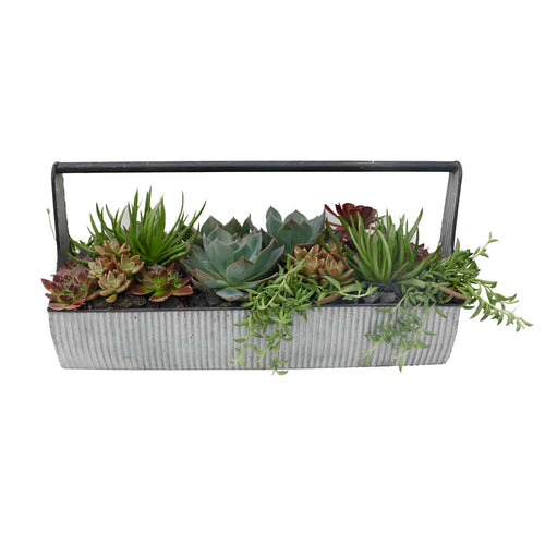Deluxe Summer Succulents Caddy