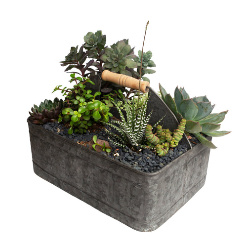 Assorted Succulents In Galvanized Trug