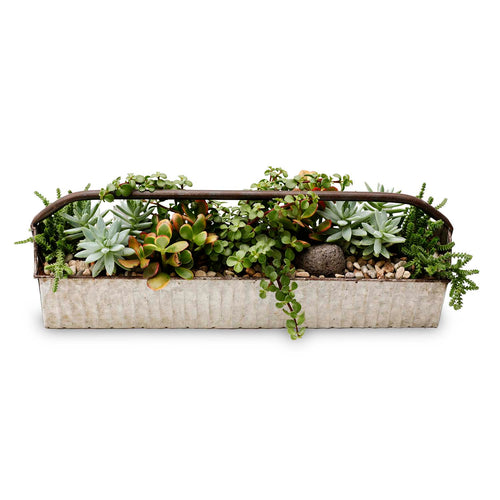 Succulents in Small Narrow Metal Trug