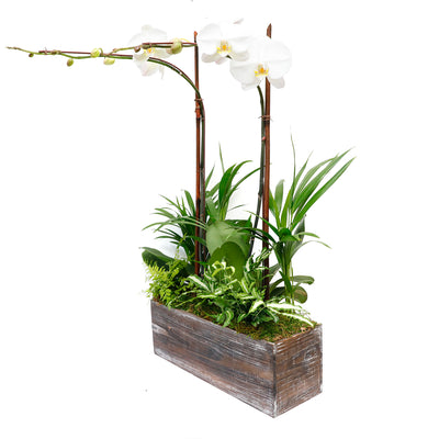 Orchids & Foliage in Rectangle Wood Planter