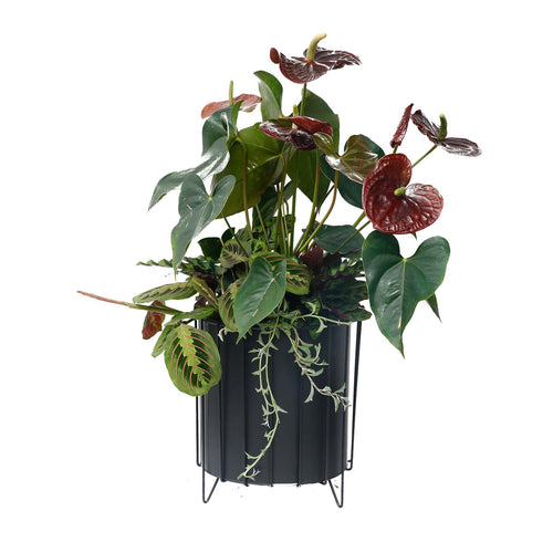 Med. Antherium & Tropical Foliages In Black Zinc Planter