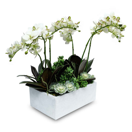 WHITE PHALAENOPSIS IN BASKET