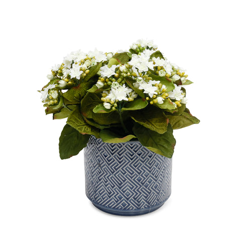 Faux White Kanlanchoe in Blue Cache Pot - Silk