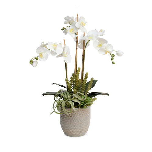 Faux White Orchid In Basket Weave Cache Pot - Silk