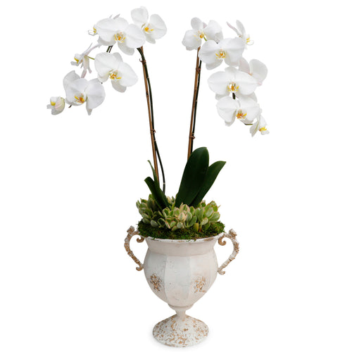 WHITE ORCHIDS IN DISTRESSED METAL URN
