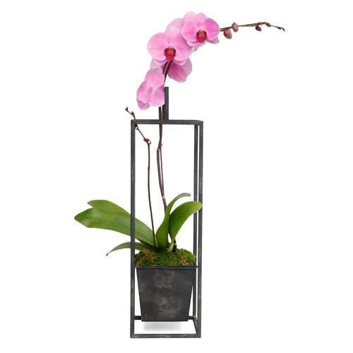 Lg. Pink Orchid in Black Metal Planter