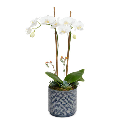White Orchid in Blue Maze Cache Pot