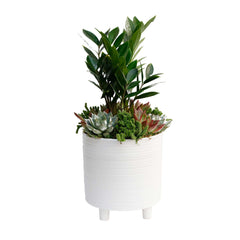 ZZ In Lg White Footed Pot
