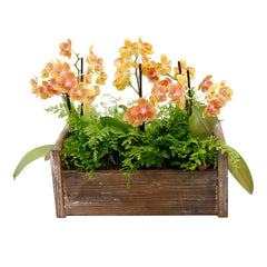 Fall Orchid In Large Rectangle Wood Box
