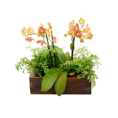 Fall Orchid In Small RectangleBox