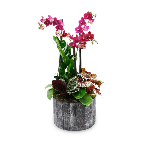 Fall Orchid In Large Round Black Wood Planter