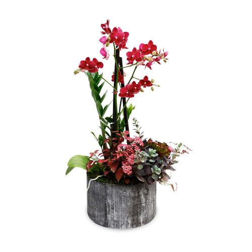 Fall Orchid in Medium Round Black Wood Planter