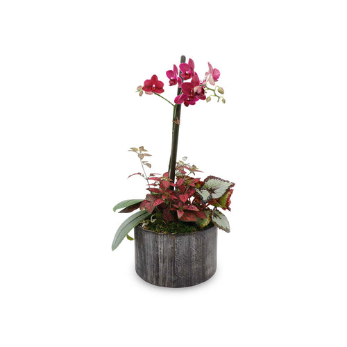 Fall Orchid In Small Round Black Wood Planter