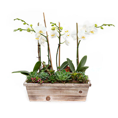 Orchids & Succulents In Small White Washed Wood Planter