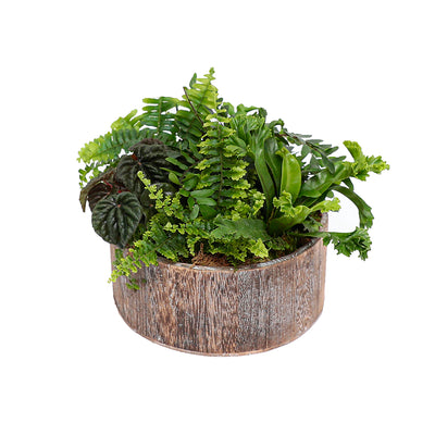 Assorted Ferns In Small Low Round Wood Planter